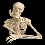 ico Human Anatomy