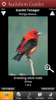 Audubon Birds - A Field Guide