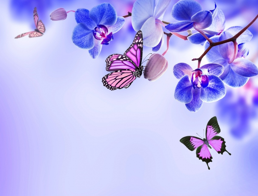 hd_wallpaper_15804