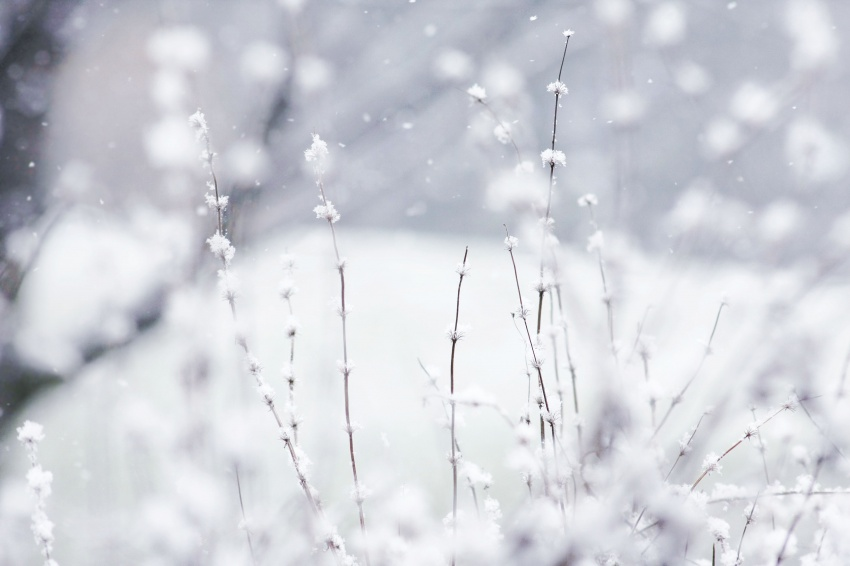 close-snow